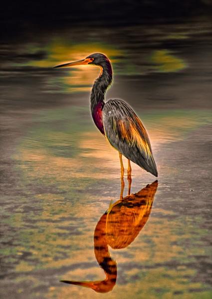Sunset on Heron