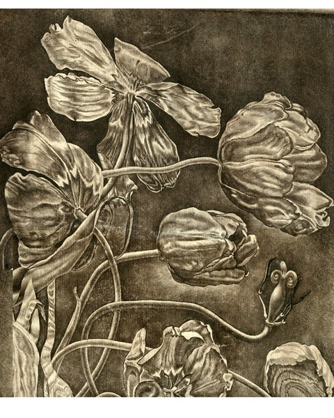 Tulips. Etching/Fragment