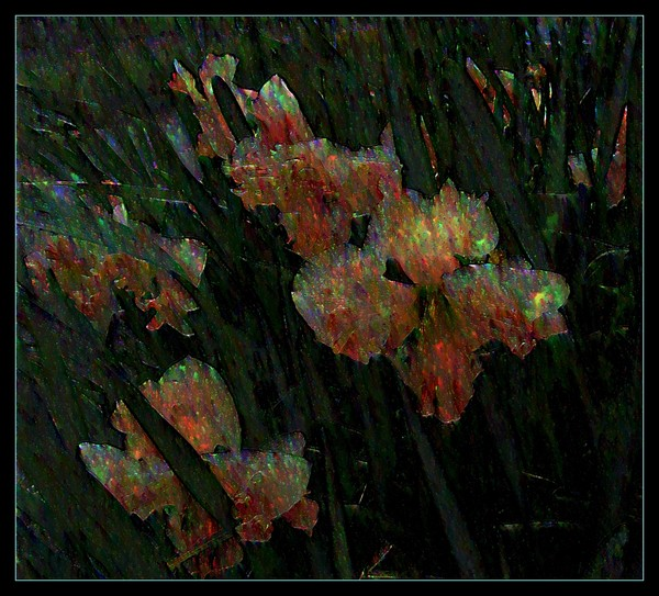 Pearly Daffodills
