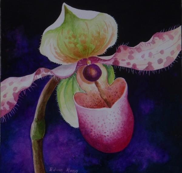 Borneo Slipper Orchid P. Chiquita