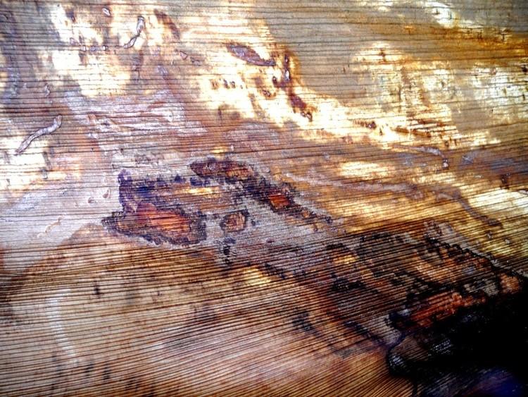 Abstract on  Bark-Canvas