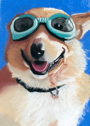 Corgi in goggles