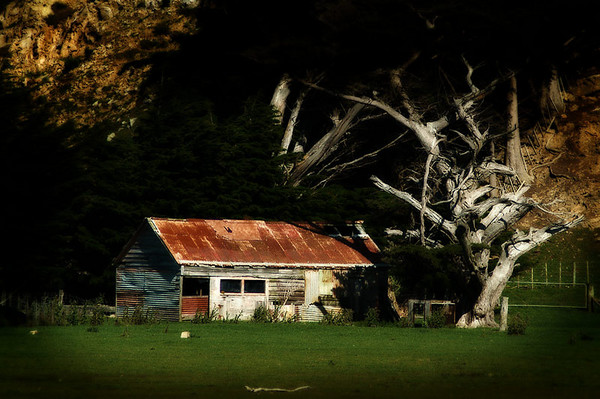 The Old Barn Under the Macrocarpa
