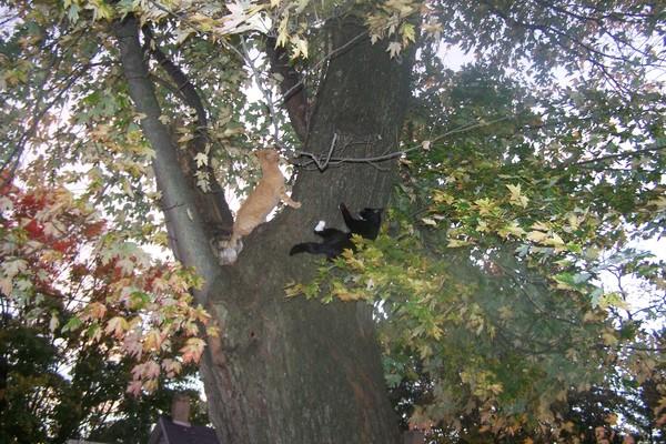 Get Off of My Tree!