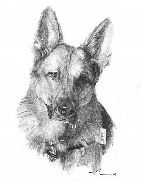 wp-lg shepherd dog sketch