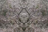 mirrored photographs