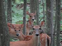THEME: Animal Photography