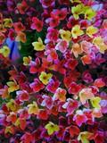 Floral Waves