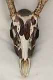 feather skull