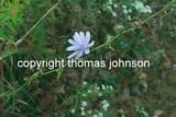 by Thomas Johnson