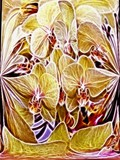 Fractalius Orchids