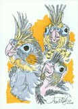 Cockatiels 