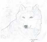 by Spirit  Wolf