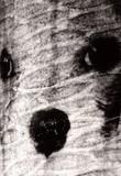 Wrinkley dog