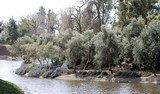 UC Davis Arboretum 1