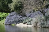 UC Davis Arboretum 2