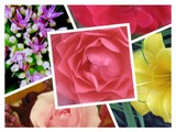 Floral Collage 61812