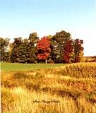 Harvest Time-2009