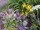 Garden Sidewalk Blooms