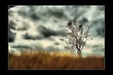 by Ropati Leaso-Cobb