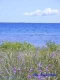 Lake Michigan & Ragged Robin