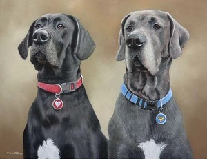 Great Danes Portrait