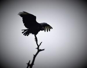 Spooky Bird