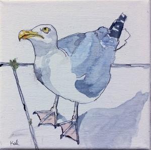 My friendly gull