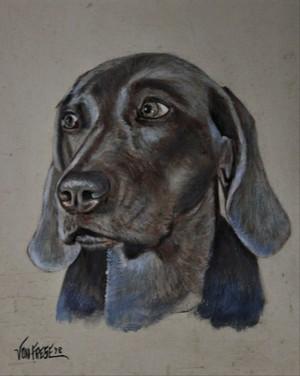 'Hund'