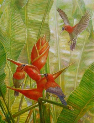 Crimson Sunbirds