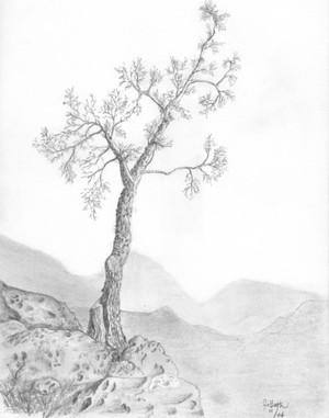 Secrets of the Tree