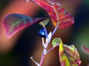 Foliage / Vines / Trees