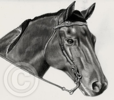 Horse commission