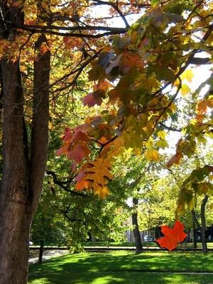 Autumn In The Park (Fourteen)