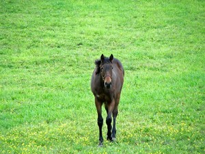 Horses Pegasus Unicorns