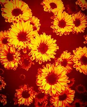 Floral Photos #4