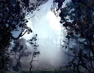 Haze Woods
