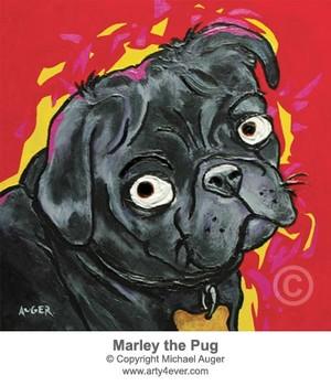 Marley the Pug