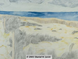 Landscape / Seascape