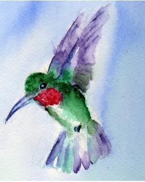 Ruby Troated hummingbird