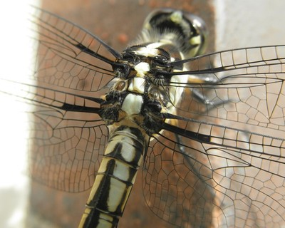 Dragonflies 2013