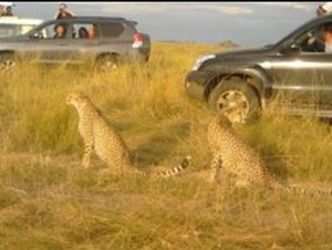 Best Wildlife Safaris