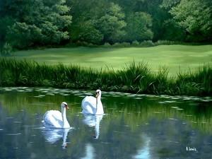 Swans - Dedham