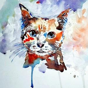 Cattfriend