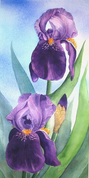 Florals Irises