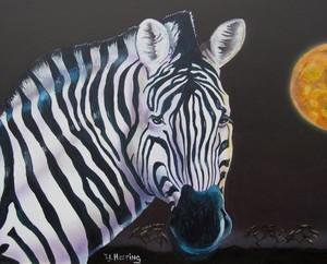 Zebra at Night