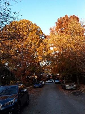 Autumn Trees In A Neighborhood