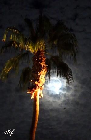 romantic night in California