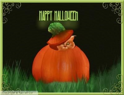 pumpkin the halloween orange cat