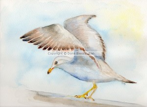 Tybee Seagull